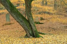 Free Autumn Wood Royalty Free Stock Image - 361556