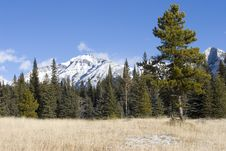Free Mountain Meadow 2 Royalty Free Stock Photo - 361815