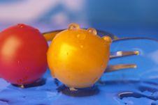Free Tomato Stock Photo - 363640