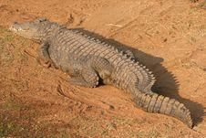 Free Crocodile Stock Photo - 364280
