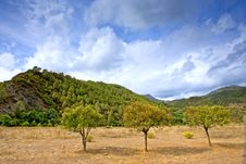 Three Trees In A Field In Andalucia In Spain Stock Photography