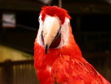 Free Parrot Stock Image - 366661