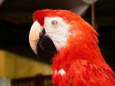 Free Parrot Stock Photography - 366662
