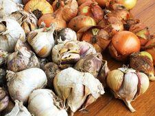 Free Onion Vs Garlic Royalty Free Stock Photography - 367807