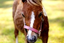 Free A Young Colt Royalty Free Stock Photography - 367857