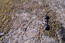 Free Ant Royalty Free Stock Images - 368939