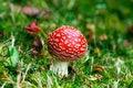 Free Mushroom Royalty Free Stock Photography - 3606927