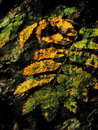 Free Art. Leaves Of A Mountain Ash Royalty Free Stock Photo - 3607125