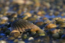 Free Seashell And Stones Stock Image - 3601091
