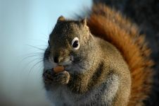 Free Squirrel Stock Photo - 3601440
