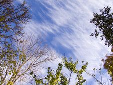 Free Cirrus Sky Veiled By Trees Royalty Free Stock Photos - 3601748