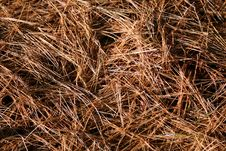 Free Pine Needles Background Royalty Free Stock Photography - 3601887
