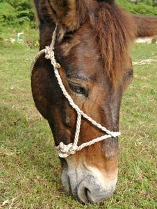 Free HORSE Stock Images - 3603394