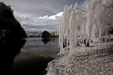 Infrared Photo- Tree, Rock Royalty Free Stock Photos