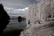 Infrared Photo- Tree, Rock Stock Photo