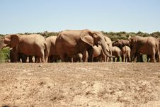 Free Elephants Stock Image - 3603471