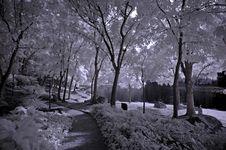 Free Infrared Photo- Tree, Rock Stock Image - 3603621