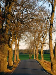 Free Tree Avenue 2 Stock Photo - 3603670
