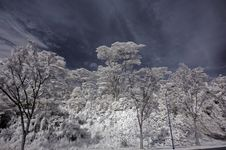 Free Infrared Photo- Tree, Skies Royalty Free Stock Image - 3603736