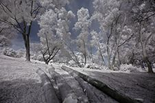 Free Infrared Photo- Tree, Tree Log Stock Image - 3603741