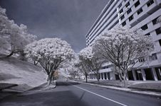 Infrared Photo- Road, Flat Stock Images