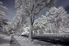 Free Infrared Photo- Tree, Road Royalty Free Stock Image - 3603756