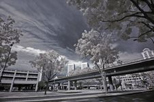 Infrared Photo- Tree And Train Stock Photography