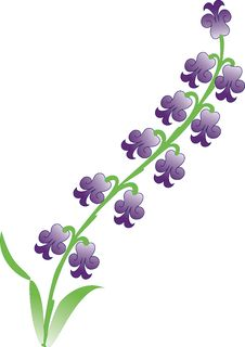 Free Hyacinth Vector Flower Stock Images - 3606204