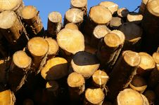 Free Timber Stock Images - 3606874