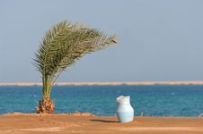 Palm In The Desert By The Sea Royalty Free Stock Photography