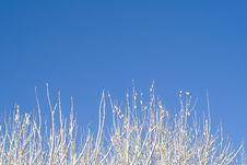 Free Birches 12 Stock Photo - 3609120