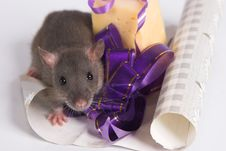 Free A Rat With A Present Stock Photos - 3609183