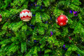 Free Chrismas Tree For Background Royalty Free Stock Images - 36004859