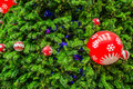 Free Chrismas Tree For Background Royalty Free Stock Photography - 36004877