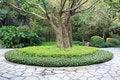Free Park Tree Stock Photography - 36006582