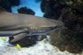 Free Shark Stock Photos - 36006893