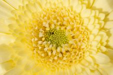 Free Yellow Flower Royalty Free Stock Photography - 36006827