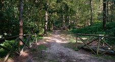 Free Walking In Torino Park Stock Image - 36007421