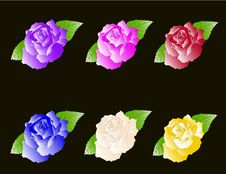 Set Six Roses Stock Photos