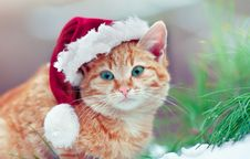 Little Kitten Wearing Santa S Hat Royalty Free Stock Photography