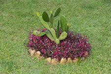 Free Cactus Stock Image - 36020601
