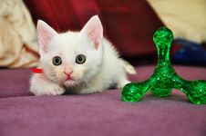 Free White Cat Royalty Free Stock Photos - 36024228