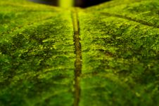 Free Leaf Macro Stock Photography - 36027812