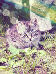 Free Retro Portrait Cat Royalty Free Stock Photo - 36028715