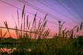 Free Urban Sunset Royalty Free Stock Photography - 36031157