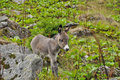 Free Beautiful Little Donkey Up In The Mountains Royalty Free Stock Photos - 36033888