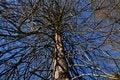 Free Dead Tree Stock Photo - 36039410