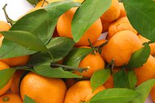 Free Tangerines With Leaves Stock Photos - 36033453