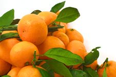 Free Tangerines With Leaves In The Lower Left Corner Stock Photos - 36033593