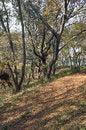 Free Autumn Landscape In The Park Area. Stock Photos - 36045053